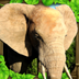 大象争霸战